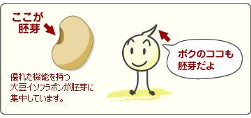 イソフラボンは胚芽に多い
