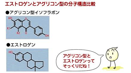 【I-A-1】エストロゲンとアグリコン型イソフラボン