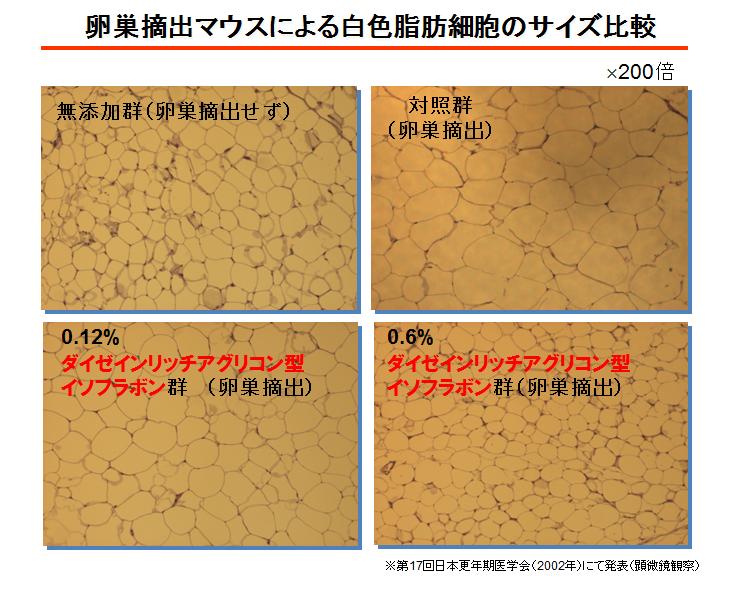 アグリコン型イソフラボンにより白色脂肪細胞のサイズ比較(図)